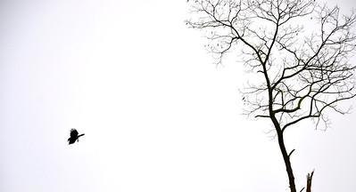 Fall From Grace - Birds 1
