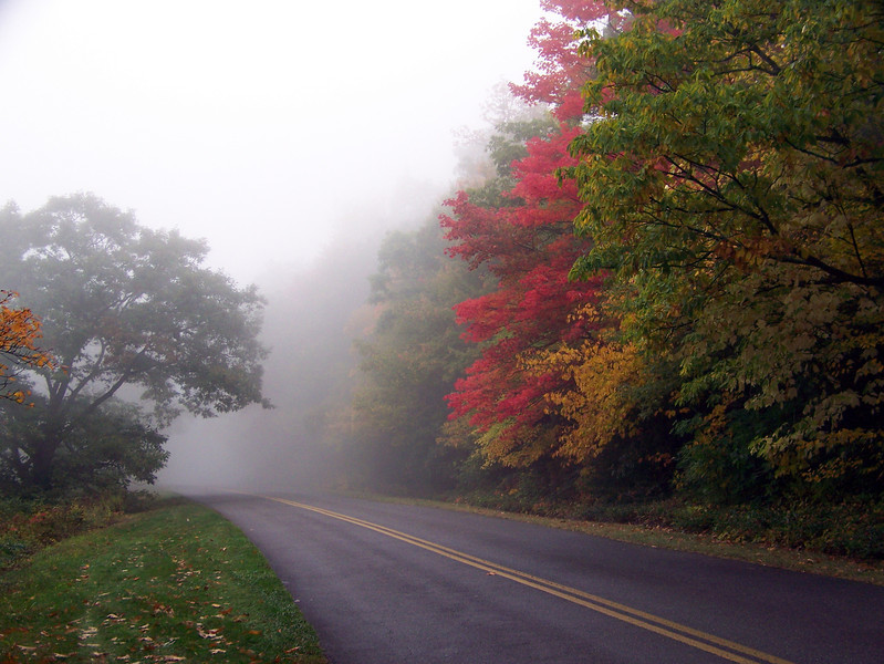 Fall color in fog, Blue Ridge Parkway, NC