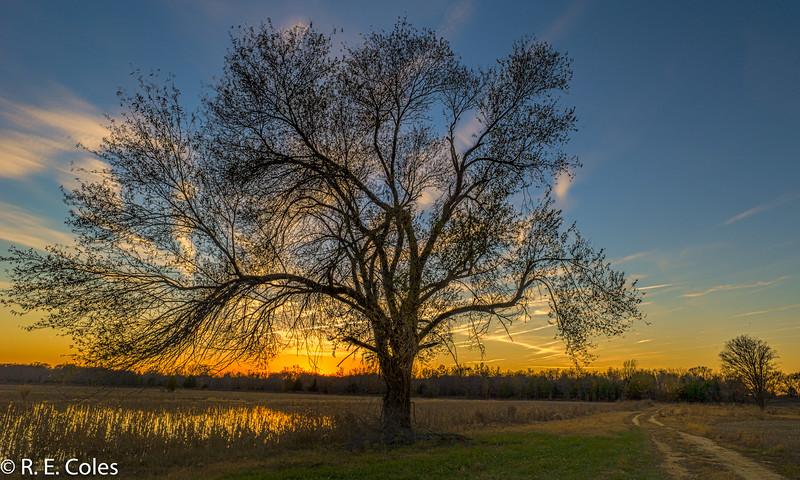 Tree No. 2