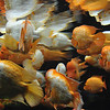 Goldfish at the Chicago Aquarium