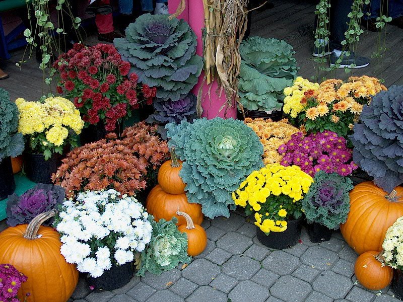 Flowers and Pumpkins, Ben and Jerry's Headquarters, Vermont