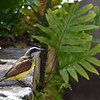 Bird in Bermuda