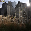 Grasses and the Chicago Skyline
