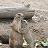 Mothers Love, Detroit Zoo, MI