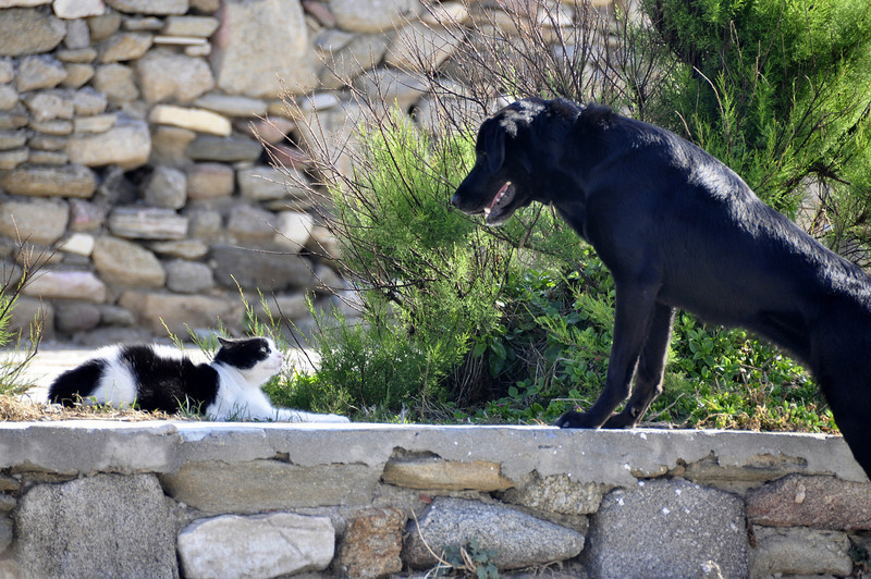 Cat and Dog, Mykonos, Greece