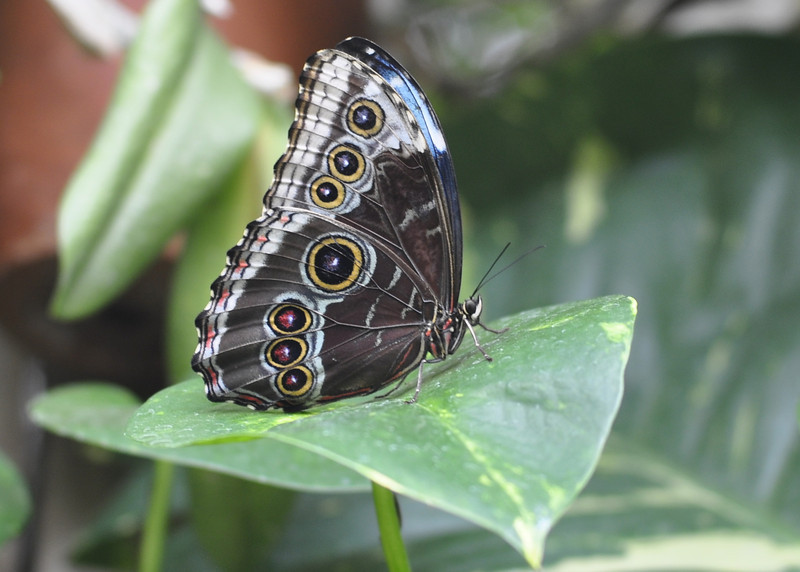 Butterfly House - The Detroit Zoo