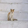 A beat up cat in Mykonos Greece