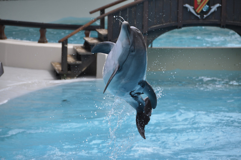 Dolphin in flight, Marineland, Niagra Falls
