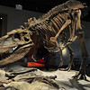 T-Rex at the Field Museum Chicago
