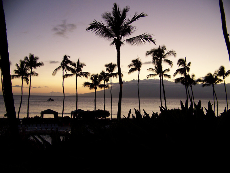 Palm Trees, Maui, Hawaii