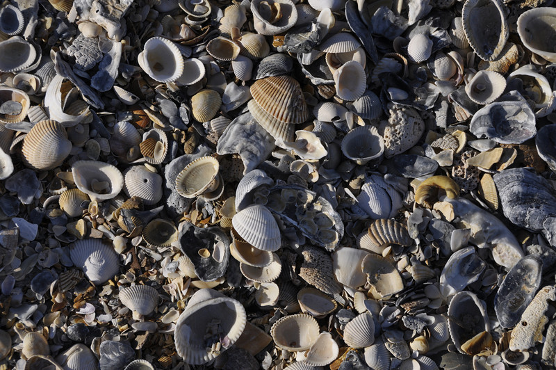 Seashells by the Seashore, Jacksonville, FL