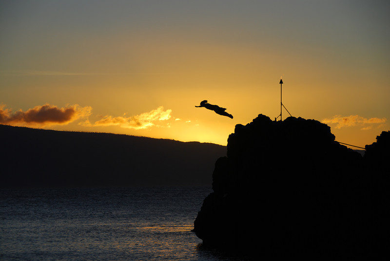 Black Rock, Kaanapali Maui.  A hotel employee dives off the rock each evening in a ceremony to commerate the local tradition.