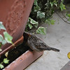 A Small Bird, taken in Venice Italy