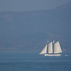 Out for a sail, San Francisco Harbor, CA