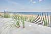 'Dune Shell & Wavy Fence'