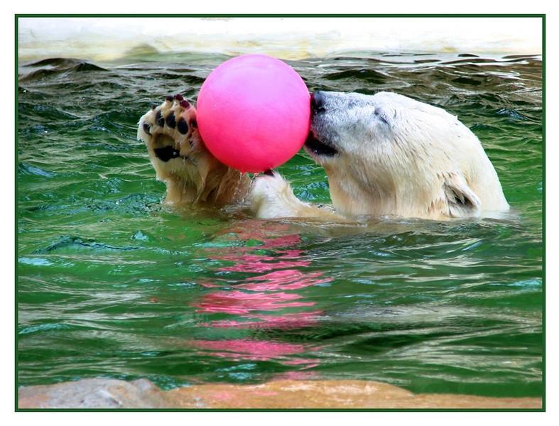 Bear&Ball