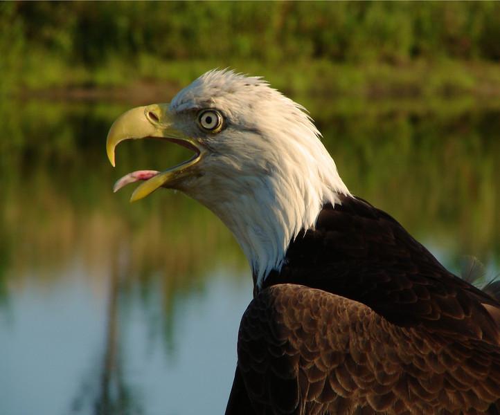 Eagle2 8x10