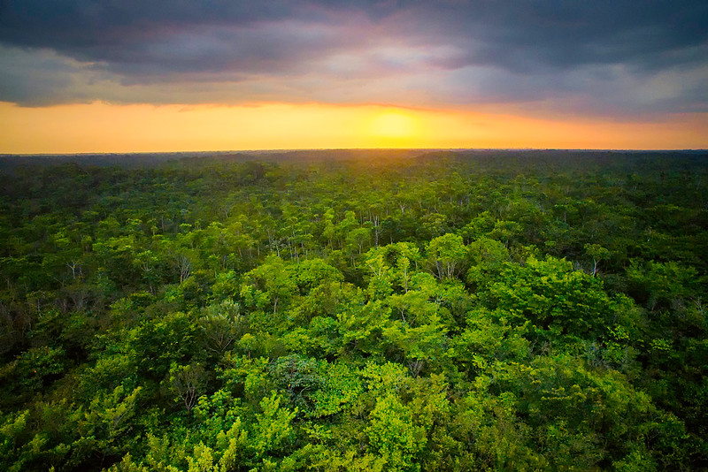 Above Amazonia