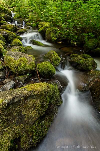 Stream along Eagle Creek