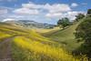 Spring, Diablo Foothills