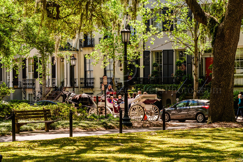 Savannah Style