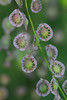 IMG_4456BealFallsWildflowers