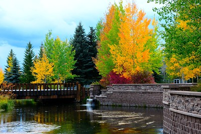 Fall trees in Jackson Hole - September 2014