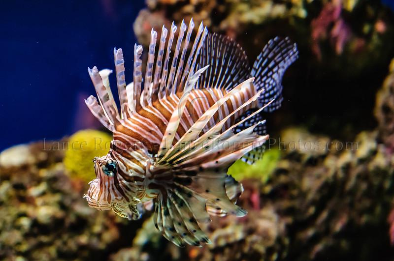 Lionfish National Aquarium