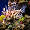 Lionfish National Aquarium