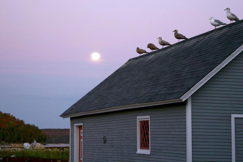 Seagulls & Moon