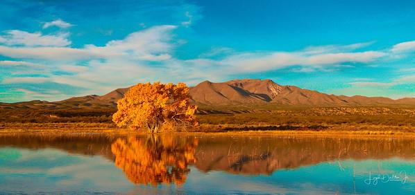 Crane Pool - Bosque Del Apache National Wildlife Refuge