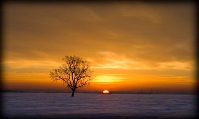 Lone Tree Sunrise on Bitter Cold Morning in North Dakota