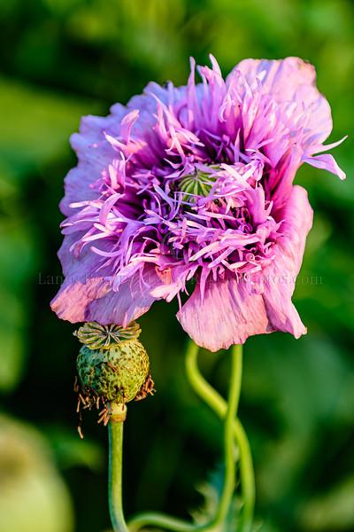 Flowers of Longwood Gardens