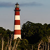 Assateague_140
