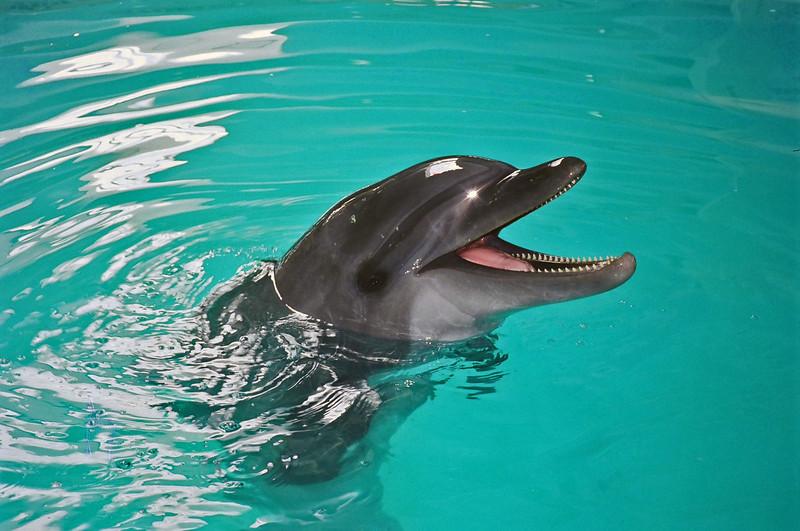 """Halona""<br /> Rehabilitated dolphin rescued on east coast of Florida"