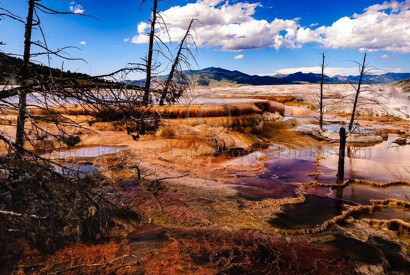 Mammoth Hot Springs of Yellowstone