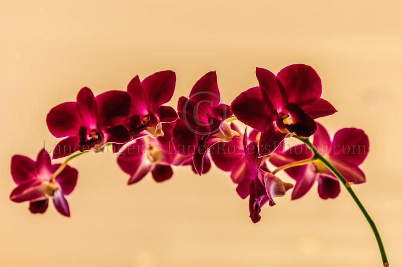 Hawaii_289