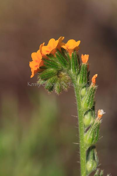 IMG_4440BealFallsWildflowers