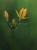 IMG_4496BealFallsWildflowers