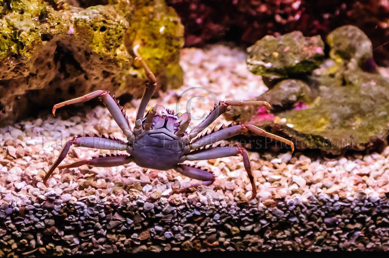 Crab National Aquarium