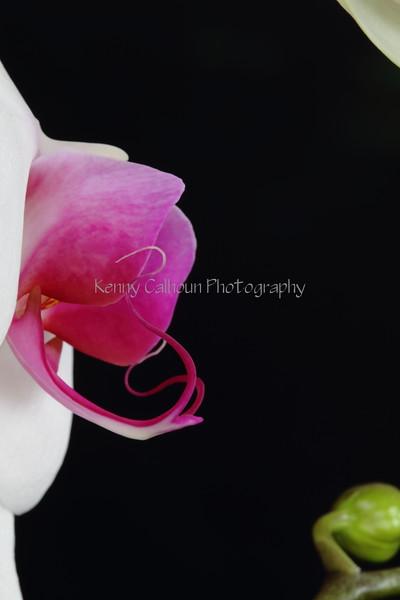 White Orchid Profile