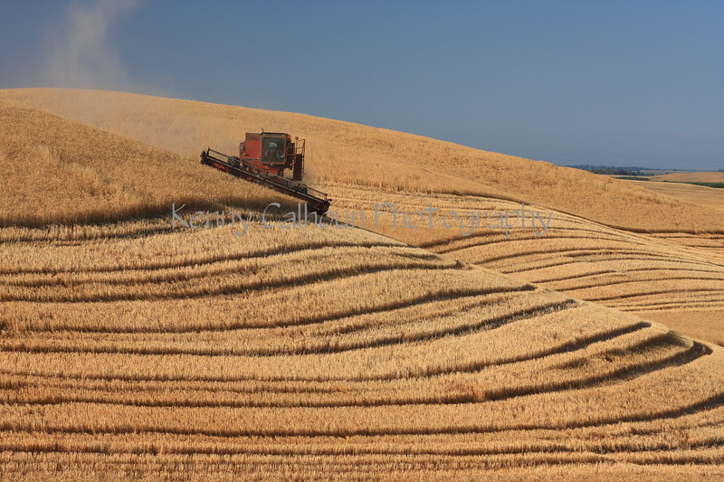 Side Hill Harvester and Barley 2