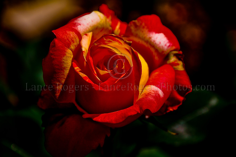Roses are Red....