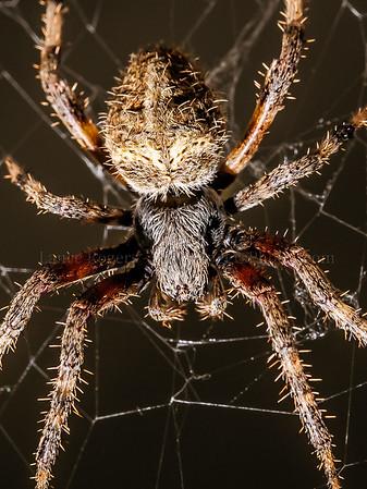 Spider_014