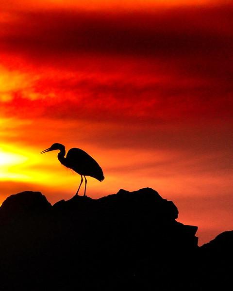 Heron in Harmony