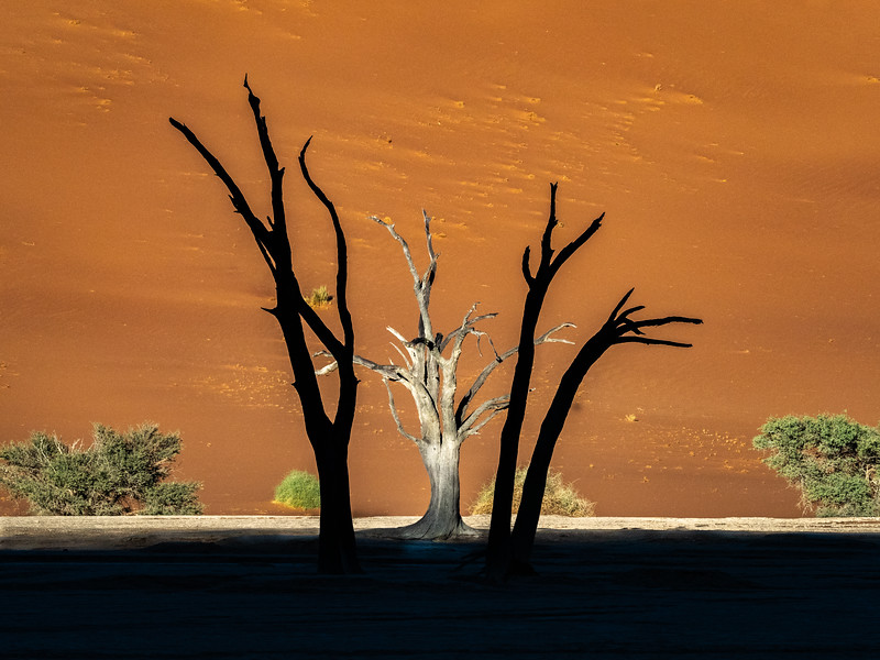 Dead camel thorn trees, which are hundreds of years old, caught in a crossfire of sunlight and shade.