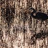Blue Heron Bombay Hook NWP