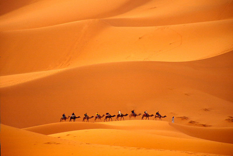 Camel Caravan-Erg Chebbi (Saraha's Highest Dune), Morocco<br /> Yes, that is the real color of the sand!