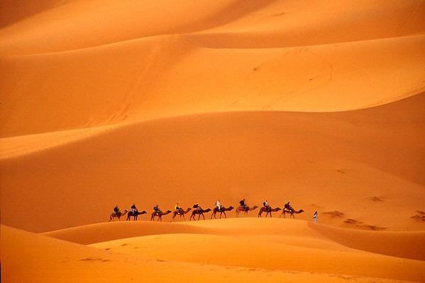 Camel Caravan-Erg Chebbi (Saraha's Highest Dune), Morocco Yes, that is the real color of the sand!