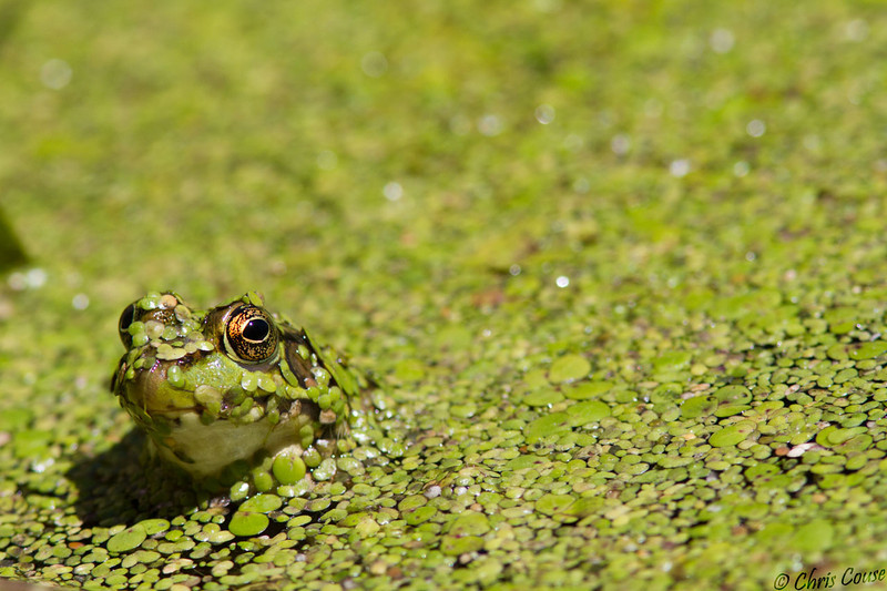 Buggin - Sterling Nature Center